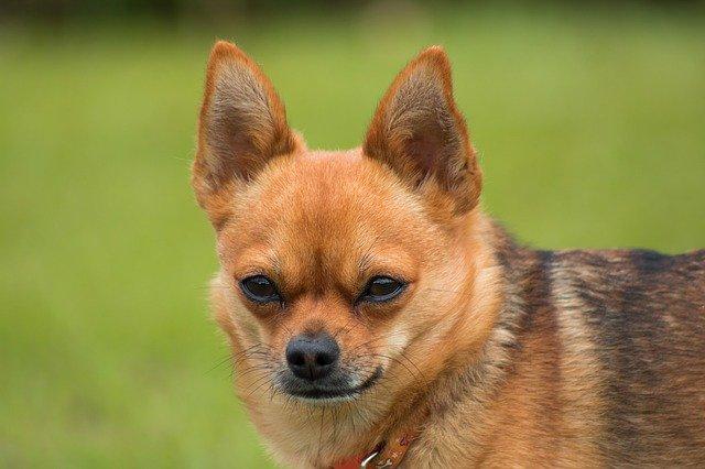 真剣な眼差しでこちらを見る犬